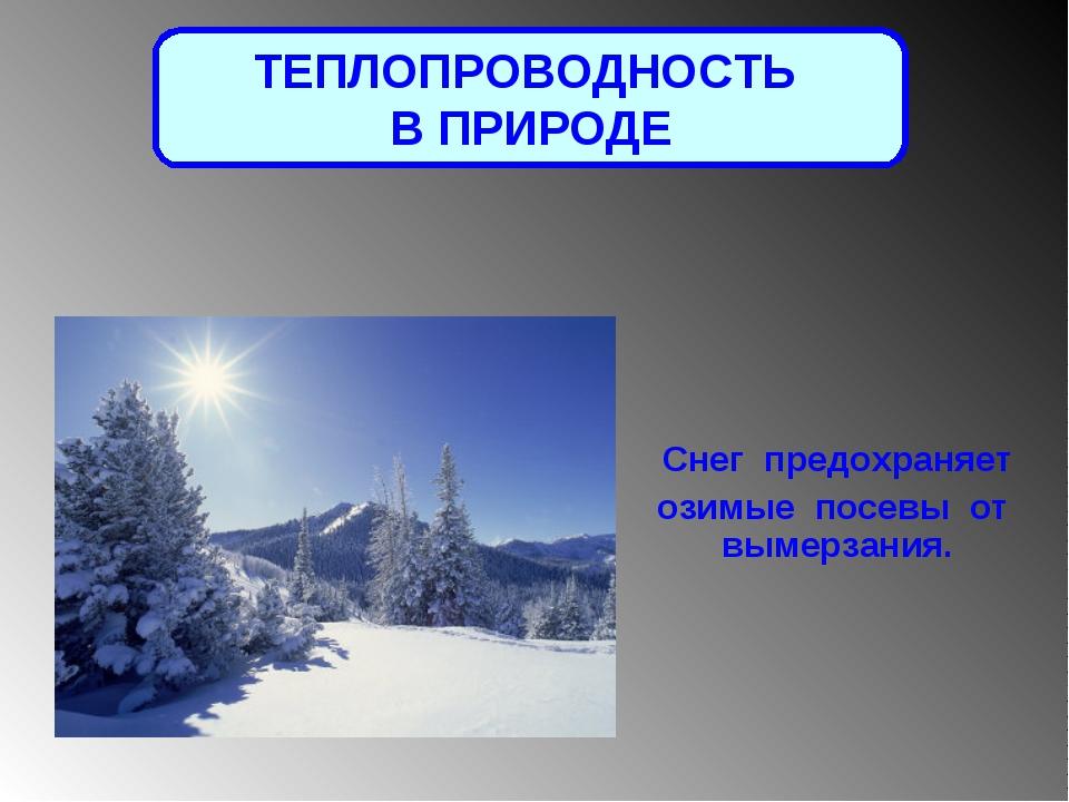 ТЕПЛОПРОВОДНОСТЬ В ПРИРОДЕ Снег предохраняет озимые посевы от вымерзания.