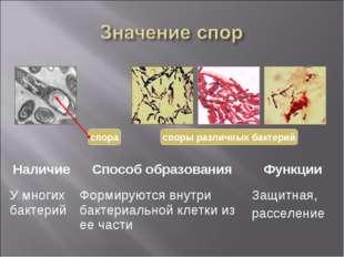 споры различных бактерий НаличиеСпособ образованияФункции У многих бактерий