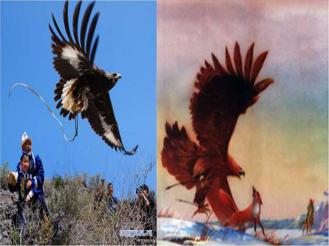 Наиболее распространенный вид охоты у казахов – охота с беркутом. Из поколени...