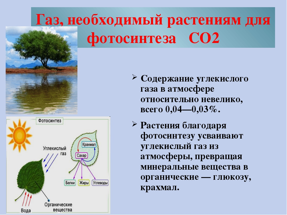 Газ, необходимый растениям для фотосинтеза CO2 Содержание углекислого газа в...