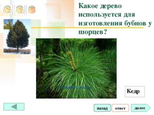 ответ далее Какое дерево используется для изготовления бубнов у шорцев? Кедр