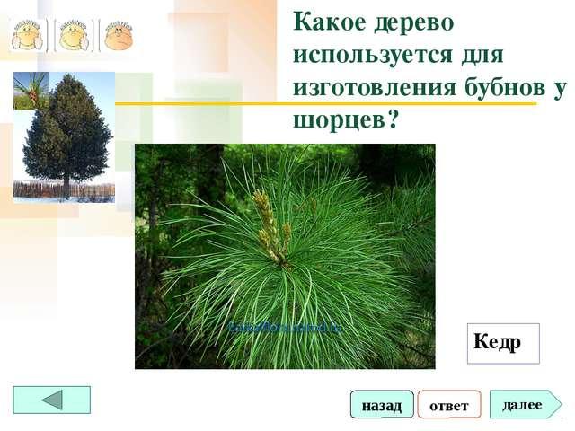 ответ далее Какое дерево используется для изготовления бубнов у шорцев? Кедр...