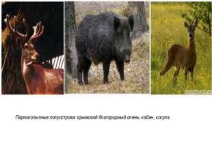 Парнокопытные полуострова: крымский благородный олень, кабан, косуля.