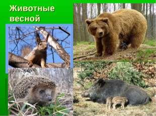 Животные весной