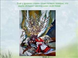 Ещё у древних славян существовало поверье, что верба обладает магическими св