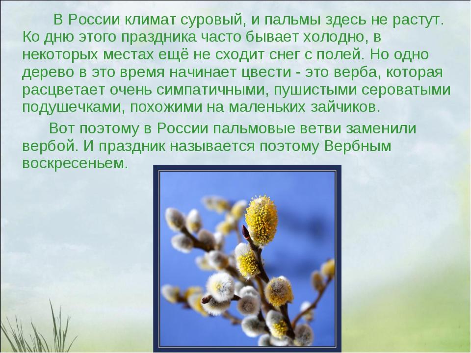 В России климат суровый, и пальмы здесь не растут. Ко дню этого праздника ча...