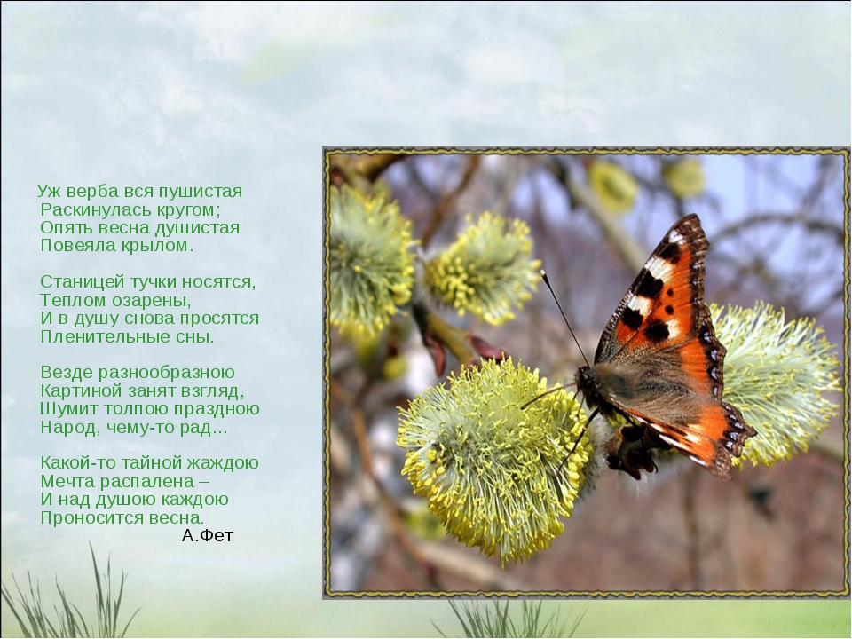 Уж верба вся пушистая Раскинулась кругом; Опять весна душистая Повеяла крыло...