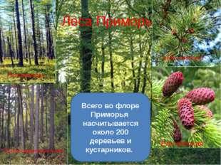 Леса Приморья Кедр корейский Ель аянская Лиственницы Пихта цельнолистная Всег