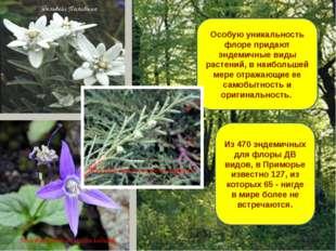 Особую уникальность флоре придают эндемичные виды растений, в наибольшей мере