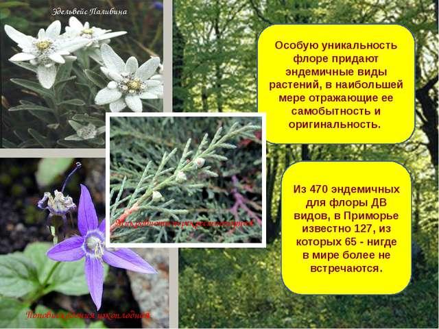 Особую уникальность флоре придают эндемичные виды растений, в наибольшей мере...