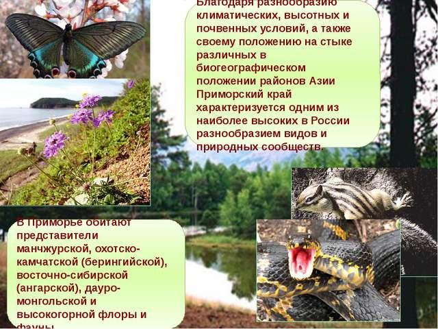 Благодаря разнообразию климатических, высотных и почвенных условий, а также с...