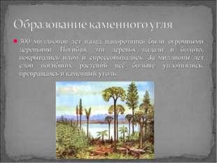 300 миллионов лет назад папоротники были огромными деревьями. Погибая, эти де