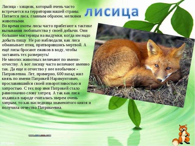 Лисица- хищник, который очень часто встречается на территории нашей страны....