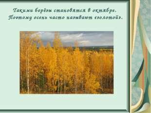 Такими берёзы становятся в октябре. Поэтому осень часто называют «золотой».
