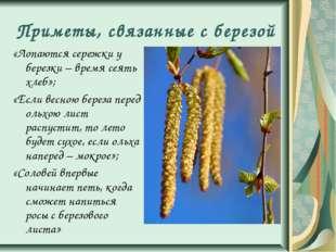 Приметы, связанные с березой «Лопаются сережки у березки – время сеять хлеб»;