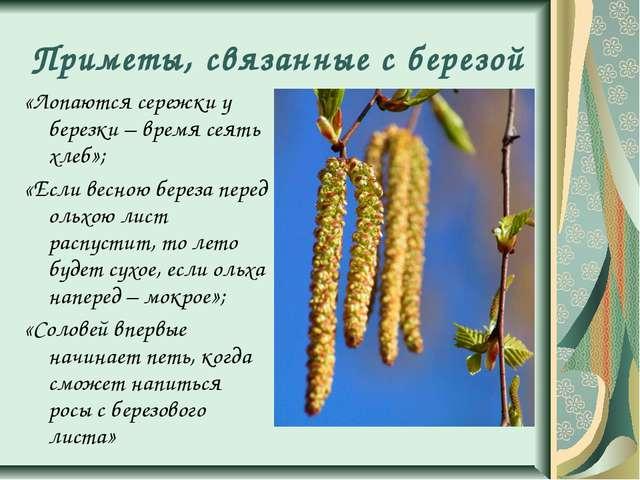Приметы, связанные с березой «Лопаются сережки у березки – время сеять хлеб»;...