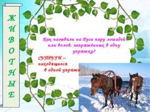 Ж И В О Т Н Ы Е Как называли на Руси пару лошадей или волов, запряжённых в од
