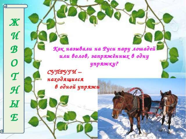 Ж И В О Т Н Ы Е Как называли на Руси пару лошадей или волов, запряжённых в од...