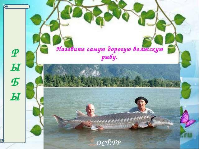 Р Ы БЫ СОКОЛ Назовите самую дорогую волжскую рыбу. ОСЁТР