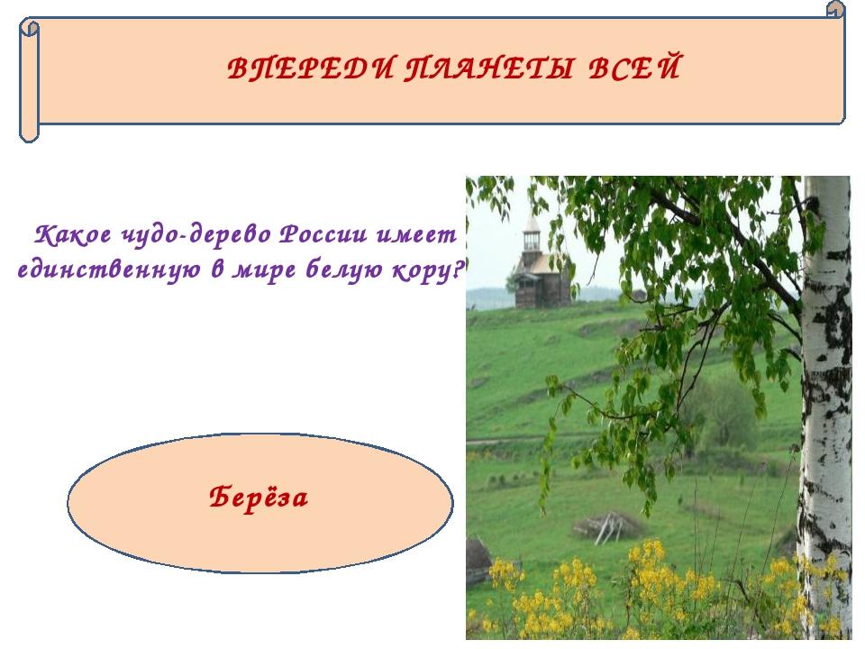 ВПЕРЕДИ ПЛАНЕТЫ ВСЕЙ Какое чудо-дерево России имеет единственную в мире белую...