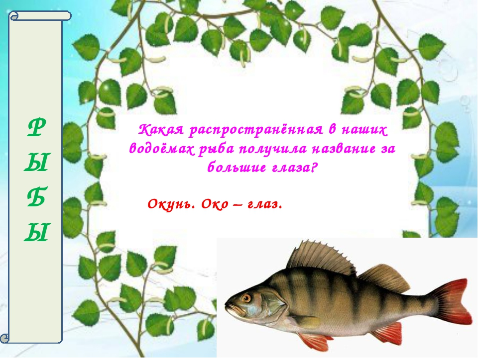 Р Ы БЫ Какая распространённая в наших водоёмах рыба получила название за боль...