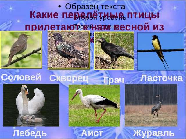 Какие перелётные птицы прилетают к нам весной из тёплых стран? Ласточка Скво...