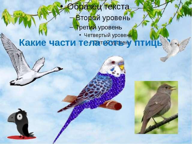 Какие части тела есть у птицы?