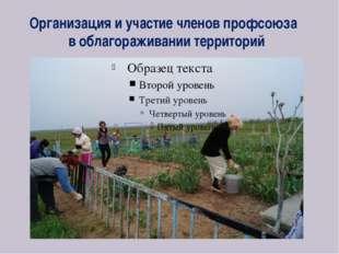 Организация и участие членов профсоюза в облагораживании территорий