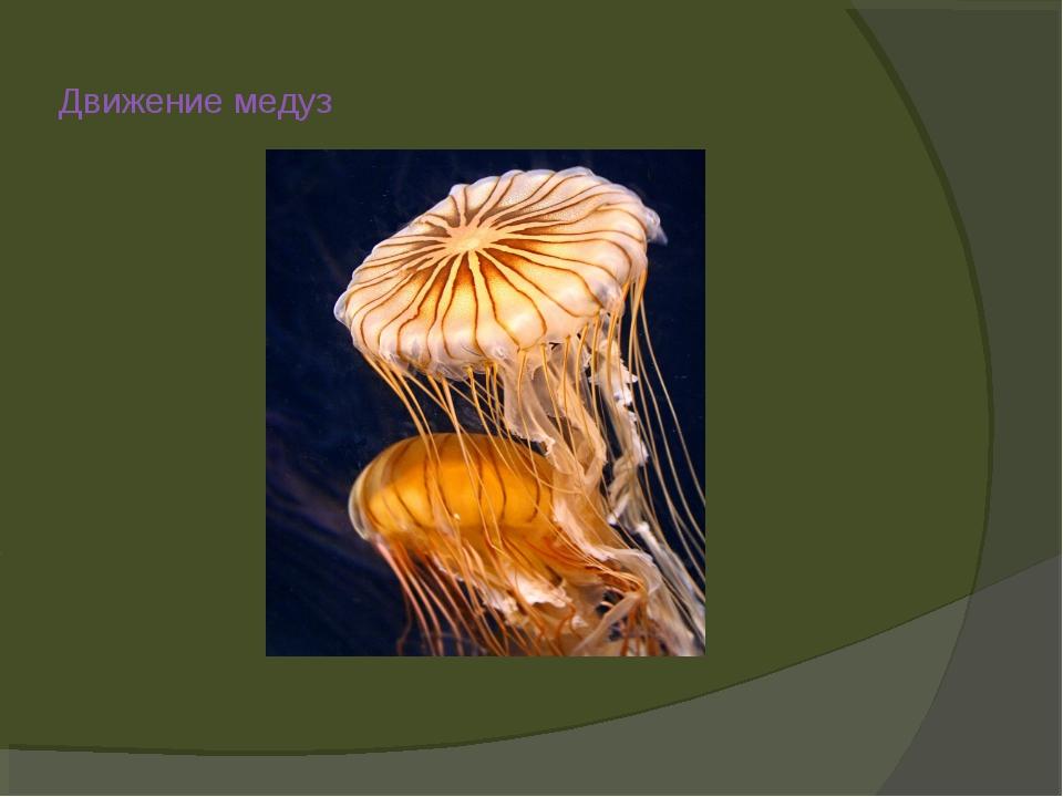 Движение медуз