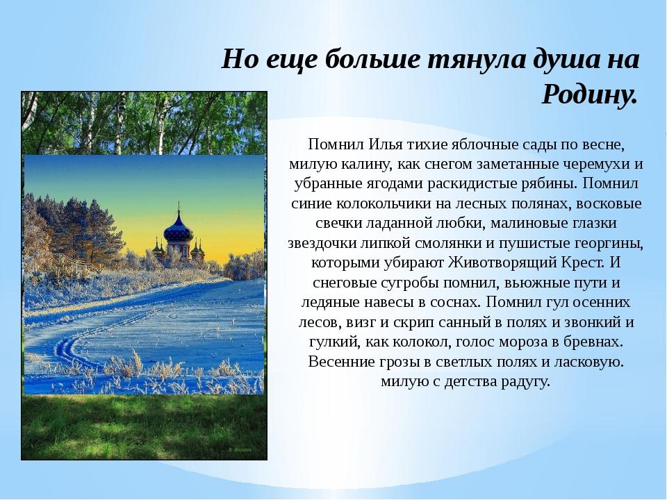 Помнил Илья тихие яблочные сады по весне, милую калину, как снегом заметанные...