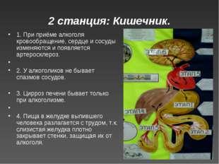 2 станция: Кишечник. 1. При приёме алкоголя кровообращение, сердце и сосуды и