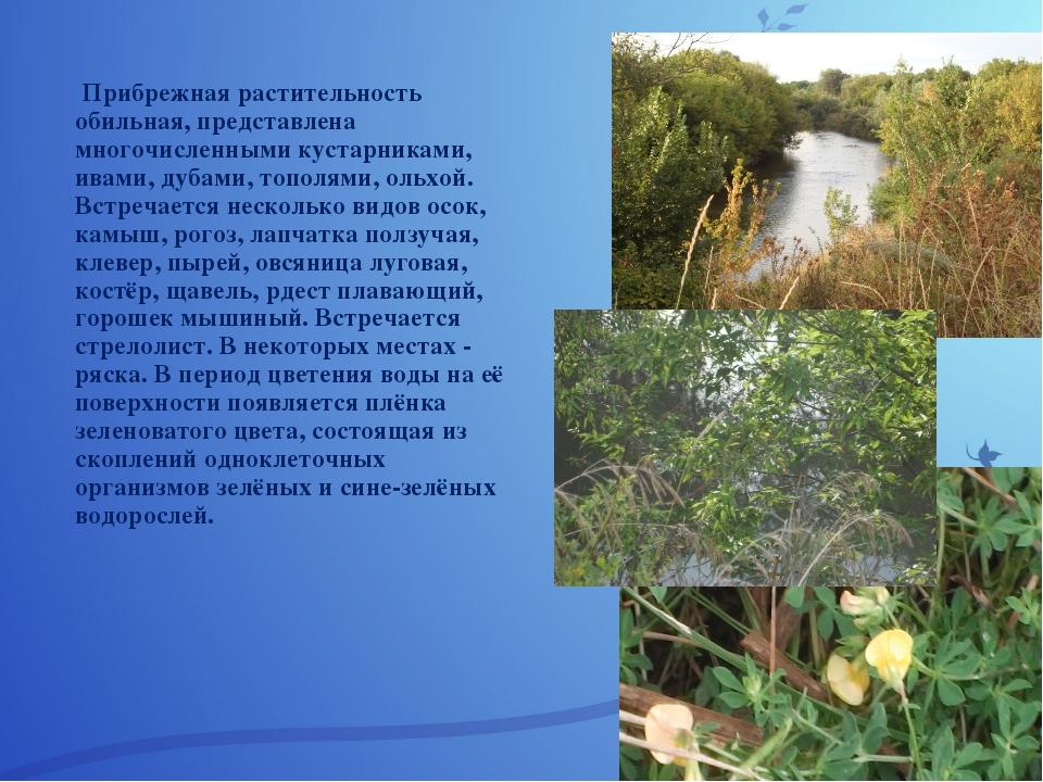 Прибрежная растительность обильная, представлена многочисленными кустарникам...
