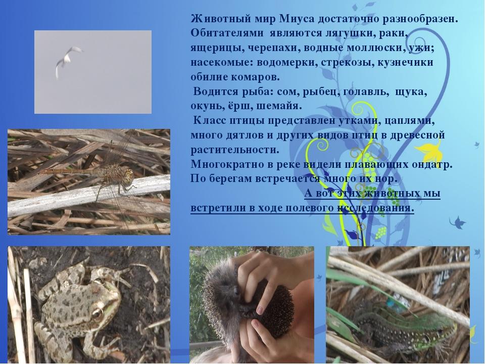 Животный мир Миуса достаточно разнообразен. Обитателями являются лягушки, ра...