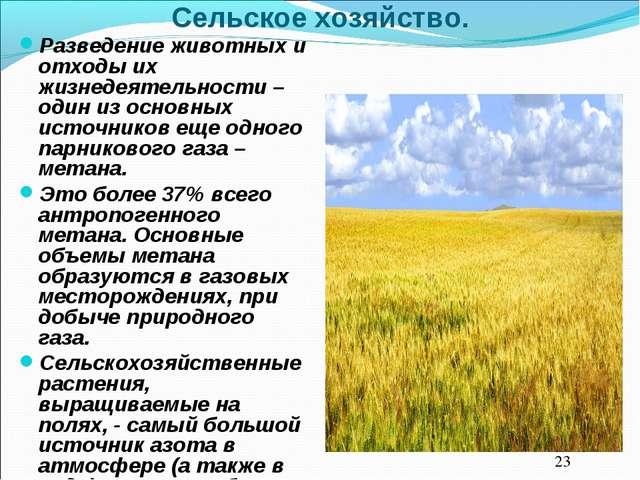 Сельское хозяйство. Разведение животных и отходы их жизнедеятельности – один...