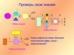 Проверь свои знания 1 2 3 H2O CO2 А В С 1 2 3 Обмен жиров Обмен белков 1 2 3