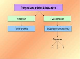 Регуляция обмена веществ Нервная Гуморальная Гипоталамус Эндокринные железы Г
