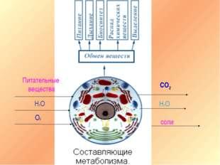 Питательные вещества Н2О О2 СО2 Н2О соли