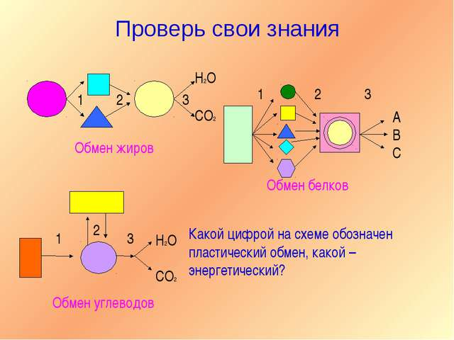 Проверь свои знания 1 2 3 H2O CO2 А В С 1 2 3 Обмен жиров Обмен белков 1 2 3...