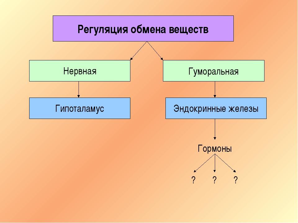 Регуляция обмена веществ Нервная Гуморальная Гипоталамус Эндокринные железы Г...