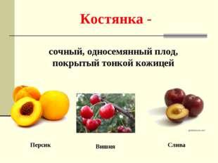 Костянка - сочный, односемянный плод, покрытый тонкой кожицей Персик Вишня Сл