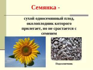 Семянка - сухой односемянный плод, околоплодник которого прилегает, но не сра