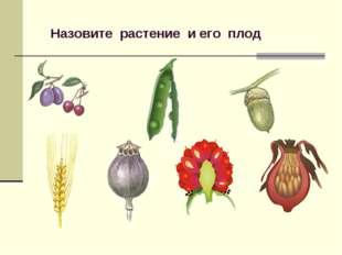 Назовите растение и его плод