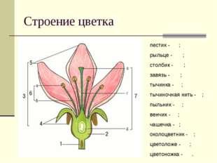 Строение цветка пестик - ; рыльце - ; столбик - ; завязь - ; тычинка - ; тычи