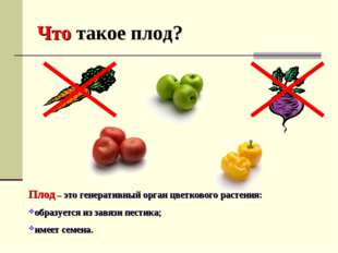 Что такое плод? Плод – это генеративный орган цветкового растения: образуется