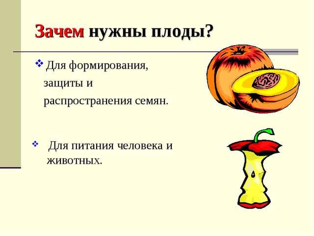 Зачем нужны плоды? Для формирования, защиты и распространения семян. Для пита...