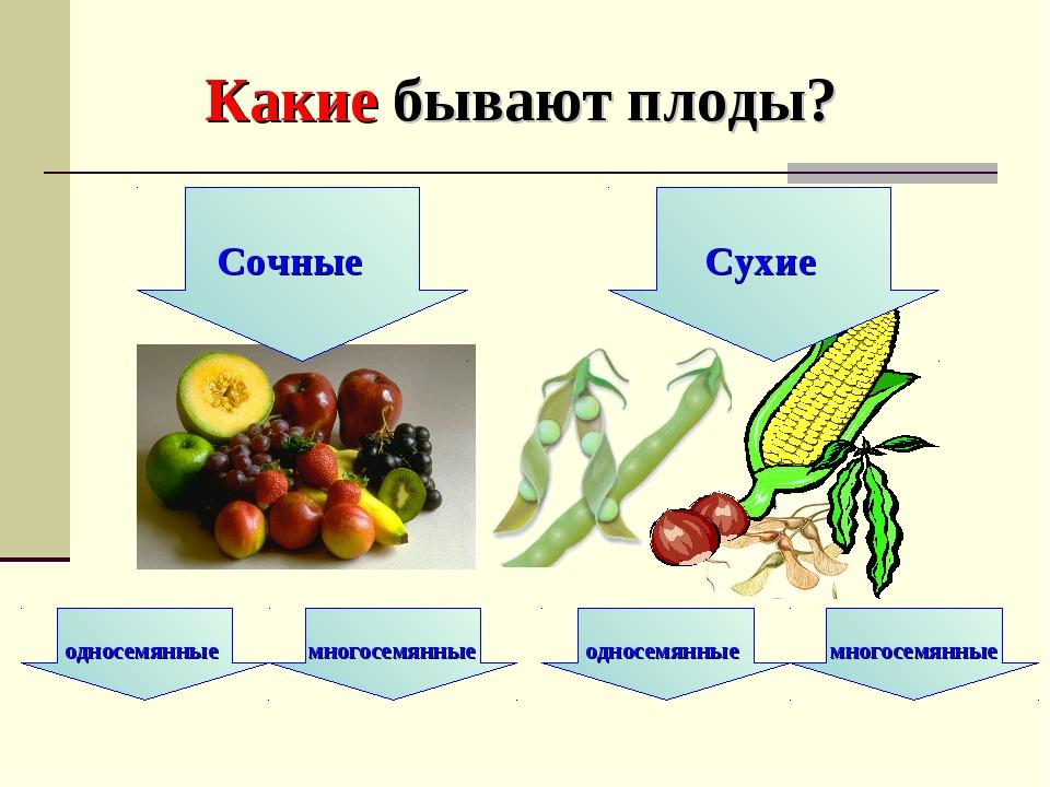 Какие бывают плоды?