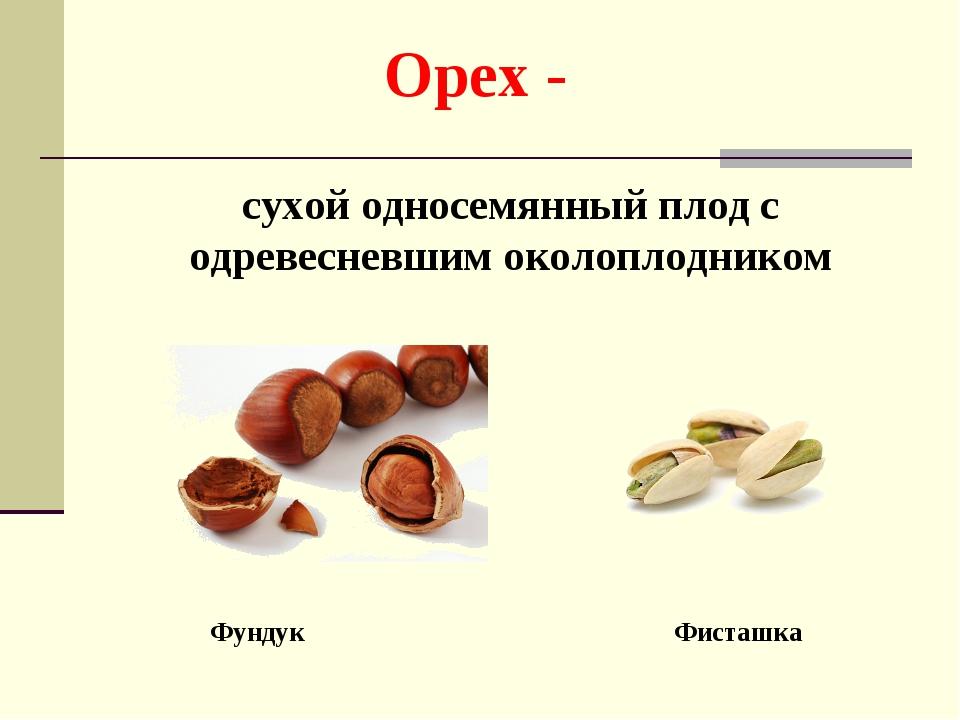 Орех - сухой односемянный плод с одревесневшим околоплодником Фундук Фисташка