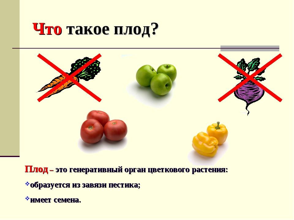 Что такое плод? Плод – это генеративный орган цветкового растения: образуется...