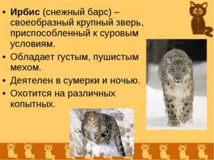 Ирбис (снежный барс) – своеобразный крупный зверь, приспособленный к суровым