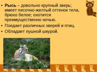 Рысь – довольно крупный зверь; имеет песочно-желтый оттенок тела, брюхо белое